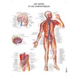 poster 600x800 veines