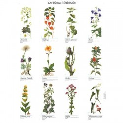 poster 600x800 plantes medicales
