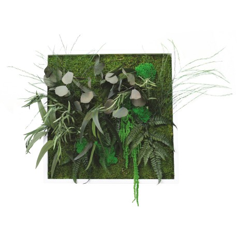 Cadre végétal carré - 50x50 cm