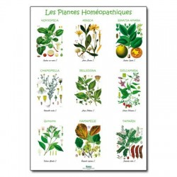 poster 600x800 plantes homeopathiques