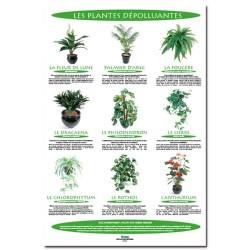 poster 600x800 plantes depolluantes