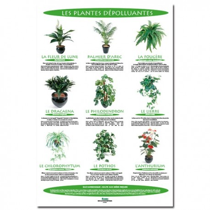 poster 600x800plantes depolluantes